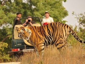 4 Day Exciting Safari in Bardia National Park, Bheri Zone