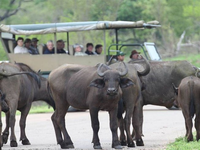7 Days Open Vehicle Kruger National Park Safari