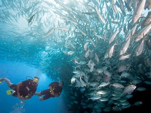 6 Day Scuba Diving and Surf Camp Tamarindo, Costa Rica