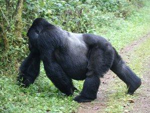 5 Days Rwanda & Uganda Safari and Gorilla Tour