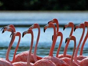 6 Day Adventure in the Mayan Land Wildlife Tour in Yucatán Peninsula