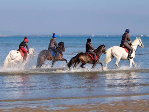 4 Day Learn to Ride: Weekend Horse Riding Holiday in the Isle of Wight