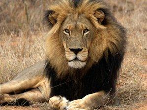 3 Days Tshukudu Bush Camp Big Five Safari in South Africa
