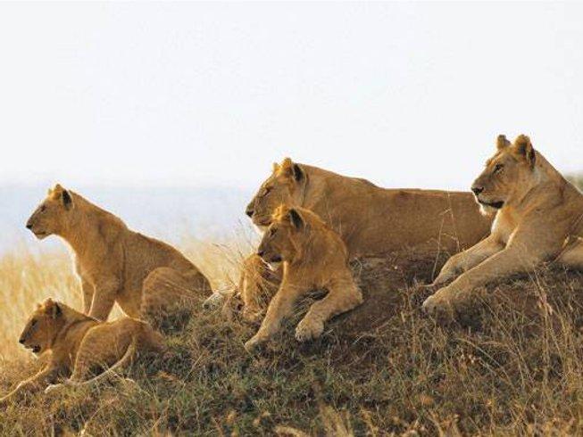 4 Days Maasai Mara Wildlife Safari in Rift Valley Province, Kenya