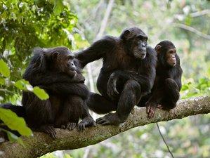6 Days Chimpanzee Safari in Tanzania
