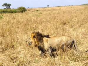 7 Days Honeymoon Safari in Kenya