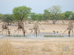 5 Days Desert Safari Tour in Namibia