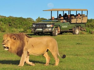 3 Days Shamwari Safari South Africa
