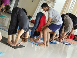 50 Days 500-Hour Hatha & Ashtanga Vinyasa Yoga Teacher Training Rishikesh India