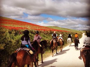 8 Day Riding Camino de Santiago on Horseback El Burgo Ranero to O Cebreiro, Spain
