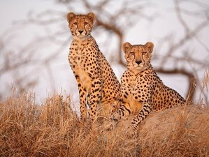 3 Days Kruger National Park and Panorama Route Safari in South Africa
