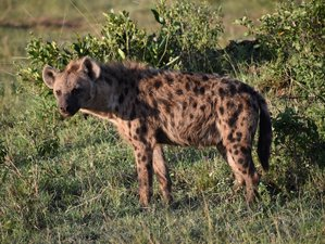 11 Days Maasai Mara, Amboseli, Lake Manyara, Serengeti, and Ngorongoro Safari in Kenya and Tanzania