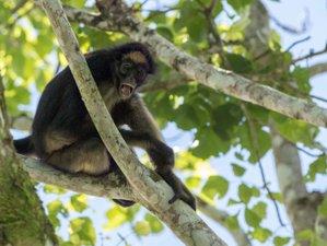 2 Day Rafting and Wildlife Tour in the Ecuadorian Amazon Rainforest