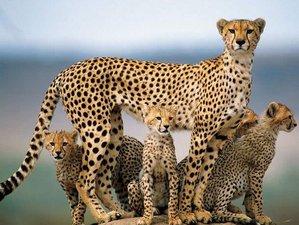 4 Days Lake Bogoria and Maasai Mara Safaris in Kenya