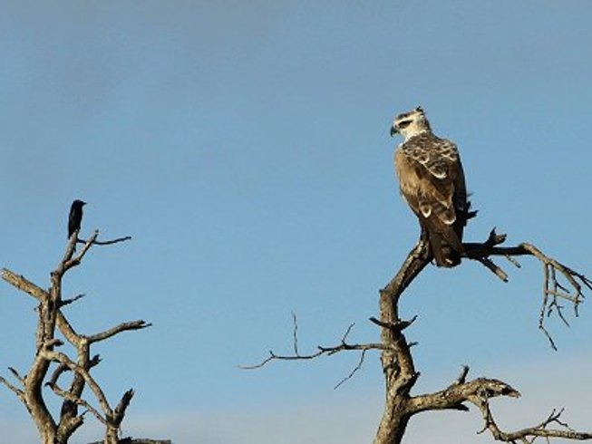4 Days Kruger National Park Tours and Budget Safari