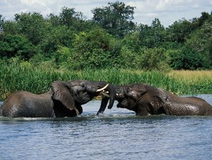 3 Days Murchison Falls National Park Safari Uganda