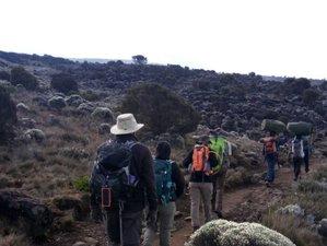 7 Days Machame Route Climbing Safari in Mount Kilimanjaro, Tanzania