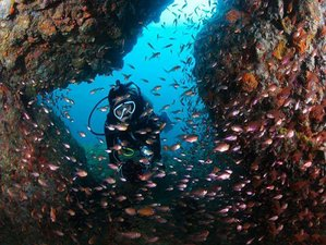 6 Day Explore Diving More: PADI Advanced Open Water Diver Course in Trincomalee, Eastern Province