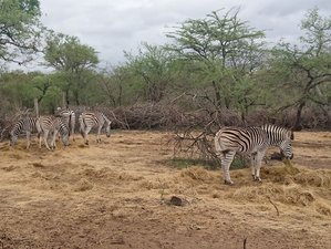7 Days Family Safari in Namibia