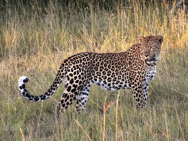 2 Days Crawl Leopard Safari in South Africa