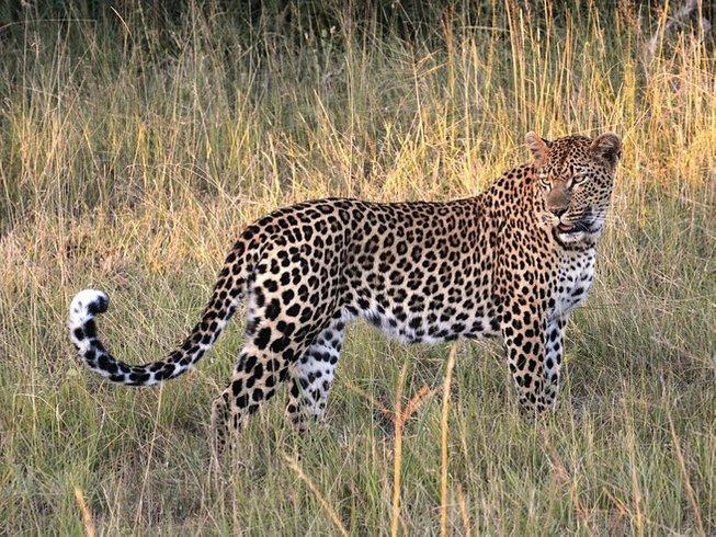 2 Days Crawl Leopard Safari in South Africa