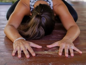 6 Week 200-Hour Online Yoga Teacher Training Exploring the Authentic Roots of Yoga