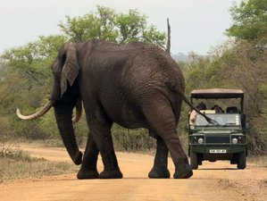 3 Day En-suite Chalet Best of Kruger National Park, Big 5 Safari with Air-con