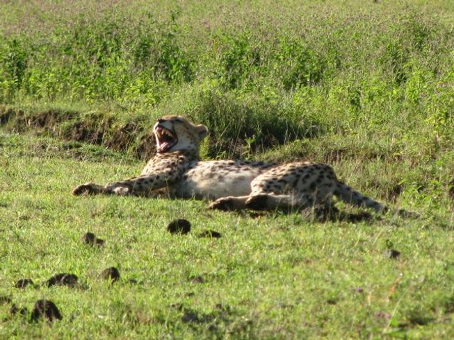 5 Days Serengeti Migration Safari