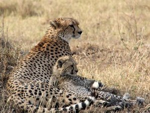 5 Days Wonderful Camping Safari in Tanzania