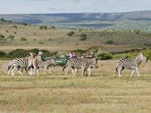 5 Days Pentagon Big Cat Safari in Maasai Mara National Reserve, Kenya