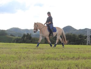 5 Day Viking Horse Riding Holiday in the Troms Region, North Norway