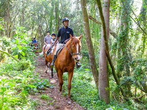 3 Days Unforgettable Horse Riding Holiday in Western Cape, South Africa