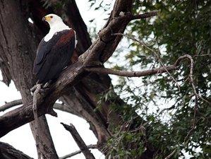 14 Days Between Zambesi and Okavango Safari in Namibia and Botswana