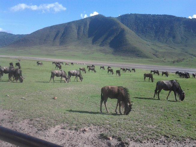 7 Days Safari in Tanzania