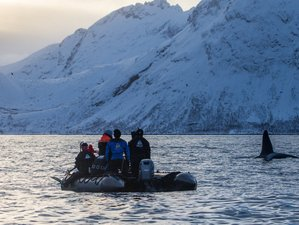 7 Days Northern Lights, Fjords Scenery, and Winter Whales Expedition in Norway