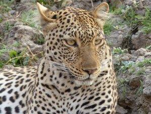 4 Days Fantastic Camping Wildlife Safari in Tanzania