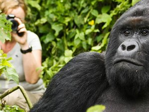 3 Days Gorilla Safari in Volcanoes National Park, Rwanda