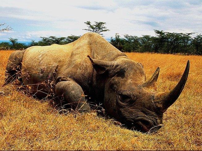 2 Days Road Safari in Kenya