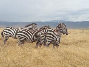 4 Days Safari in Ngorongoro, Manyara, and Tarangire, Tanzania