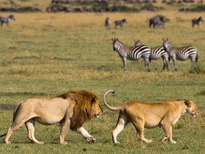 12 Days Great Migration Tanzania and Kenya Safari