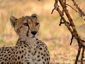 4 Days Tanzania Best Wildlife Parks Safari in Tarangire, Serengeti, Ngorongoro Crater & Lake Manyara