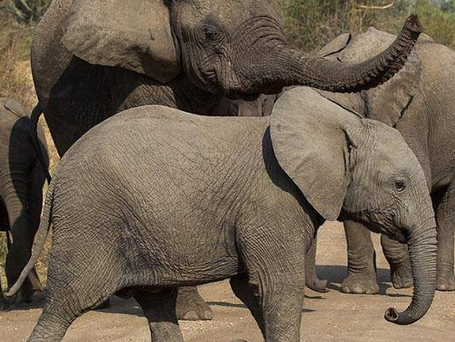 7 Days Cultural Tour and Primate Safari in Rwanda