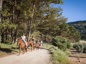 8 Day Bitless & Barefoot Ethical Riding Holiday, Cortijo Los Lobos, Malaga, Spain