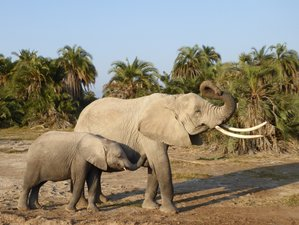 7 Days Big Five Safari in Kenya