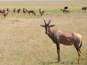 10 Days Wonderful Kenya and Tanzania Safari