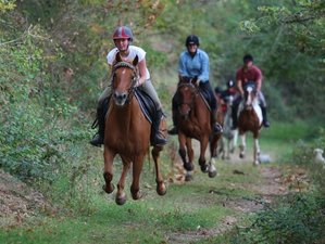 8 Day New Year Break and Horse Riding Holiday in Asprières, Occitanie