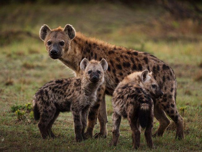 4 Days Pumba Safaris in South Africa