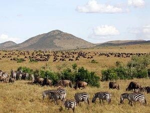 7 Days Treetops Safari in Aberdare, Samburu, Lake Nakuru National Parks and Maasai Mara in Kenya