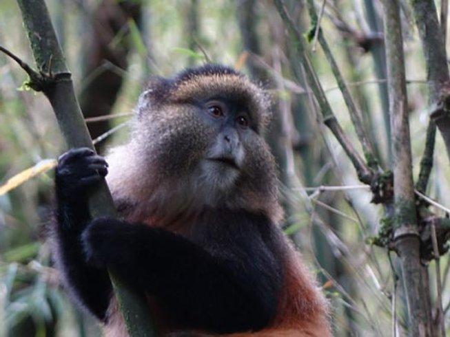 4 Days Primate Safari in Rwanda