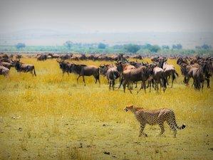 4 Days Samburu Game Reserve and Ol Pejeta Conservacy Safari in Kenya